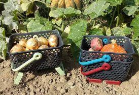 Paniers de Récolte Kajo 4L – 24x20x15 cm (Lot de 3) Version Mini